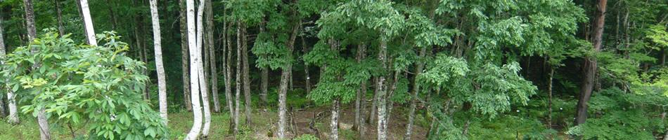 自然と四季を肌で感じ、土の暖かさを手足で受ける。田舎暮らしを楽しむ。