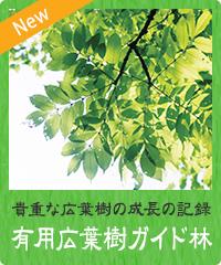 有用広葉樹モデル林
